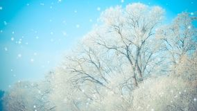 Beautiful big trees in the snow against the blue sky, the filter. Cinemagraph seamless loop animation motion gif render background stock footage