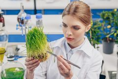 Beautiful biologist with grass. Beautiful biologist working with grass and tweezers in laboratory Royalty Free Stock Images