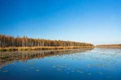 Beautiful Birch Forest And Lake, Pond, River In Autumn Season. S Stock Image