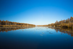 Beautiful Birch forest and pond in autumn season. Beautiful Birch forest and lake, pond, river in autumn season. Sunny day, clear sky Royalty Free Stock Photos