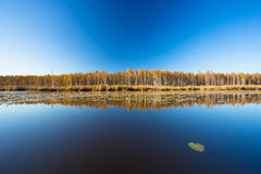 Beautiful Birch forest and pond in autumn season. Sunny day, cle. Beautiful Birch forest and lake, pond, river in autumn season. Sunny day, clear sky Stock Photography