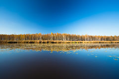 Beautiful Birch forest and pond in autumn season. Sunny day, clear sky. Beautiful Birch forest and lake, pond, river in autumn season. Sunny day, clear sky Stock Photography