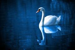 Beautiful, Bird, Blue, Calm, Color Stock Photos