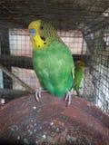 Beautiful bird Stock Photo