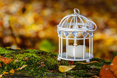 Beautiful bird cage in autumn forest Stock Photos