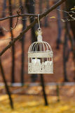 Beautiful bird cage in autumn forest Royalty Free Stock Photography