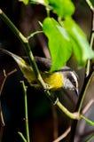 Beautiful bird Royalty Free Stock Images