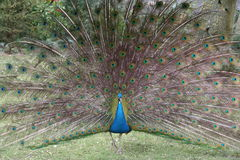 Beautiful bird feathers Stock Images