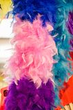 Beautiful bird feathers for decorative aims Royalty Free Stock Photo
