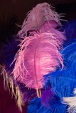 Beautiful bird feathers for decorative aims Royalty Free Stock Photos
