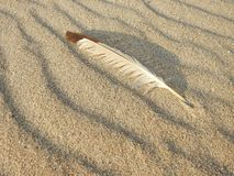 Beautiful bird feathers on sand, Lithuania stock image