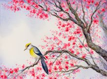 Beautiful bird on flowering branch. Watercolor painting royalty free illustration