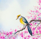 Beautiful bird on flowering branch. Watercolor painting Royalty Free Stock Photography