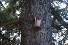 Beautiful Bird home in Italy Royalty Free Stock Image