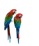 Beautiful bird isolated. Scarlet Macaw, beautiful bird isolated with white background Royalty Free Stock Images