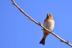 Beautiful bird Stock Photography