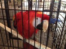 beautiful bird royalty free stock image
