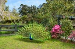 Beautiful bird in blooming garden. Royalty Free Stock Photography