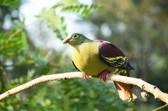 Beautiful bird on the tree. In nature Stock Image