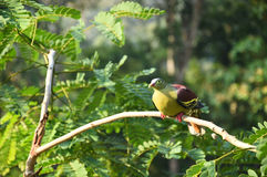Beautiful bird on the tree. In nature Royalty Free Stock Image