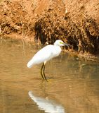 Beautiful bird in the water of my city stock photography