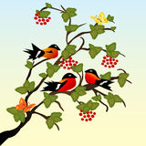 Beautiful birds on branch Royalty Free Stock Images
