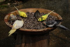 BEAUTIFUL BIRDS EATING stock photo
