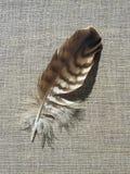 Beautiful birds feather Royalty Free Stock Photos