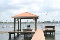 Beautiful birds floating around dock straight. Shot of beautiful birds floating around dock straight Stock Images
