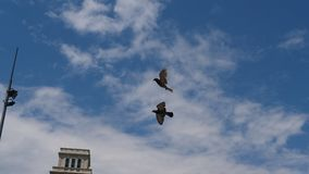 Free Birds Flying Over The City 2. Beautiful Birds Flying over the city Royalty Free Stock Image