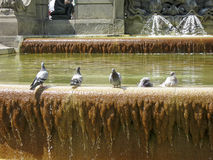 Beautiful birds in the fountain. Birds enjoy the center of one of the major cities stock image