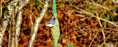 Beautiful birds. Huskvarna park in jonkoping Sweden stock photography