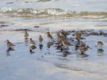 Beautiful birds near Baltic sea, Lithuania royalty free stock photography