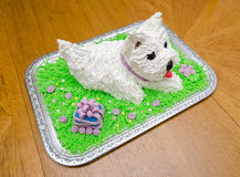 Beautiful birthday cake in shape of the white yorkshire terrier Stock Images