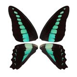 Beautiful black butterfly wings with turquoise spots isolated on white background stock image