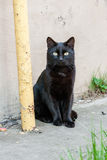 Beautiful black cat with green eyes stock images