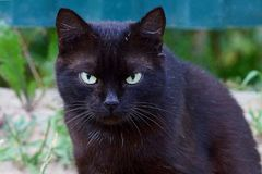 Beautiful black cat with green eyes on the street. Black cat sitting on the street and looking royalty free stock photos