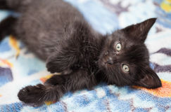 Beautiful black cat lying on floor Royalty Free Stock Photo