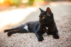 Beautiful black cat lying on the road royalty free stock image