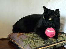 Beautiful black cat on a pillow with a pink ball. The cat has big yellow eyes stock photo