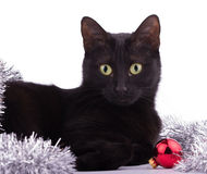 Beautiful black cat with a red bauble and silver tinsel Stock Photo