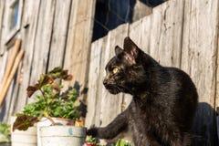 Beautiful black cat Stock Images