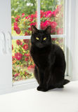 Beautiful black cat sitting in front of a white window Stock Photo