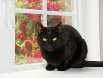 Beautiful black cat sitting in front of a window Royalty Free Stock Images