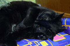 Beautiful black cat sleeping on a blue lounger with geometric pattern royalty free stock images