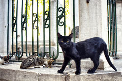 Beautiful black cat with yellow eyes Royalty Free Stock Images