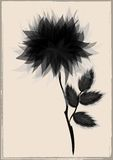 A beautiful black flower by vintage frame Stock Image