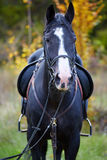 Beautiful black horse in the forest Stock Images