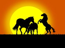 Beautiful black horse silhouettes Stock Image