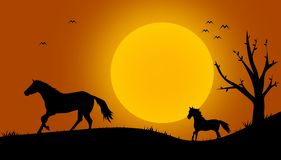 Beautiful black horse silhouettes Royalty Free Stock Image